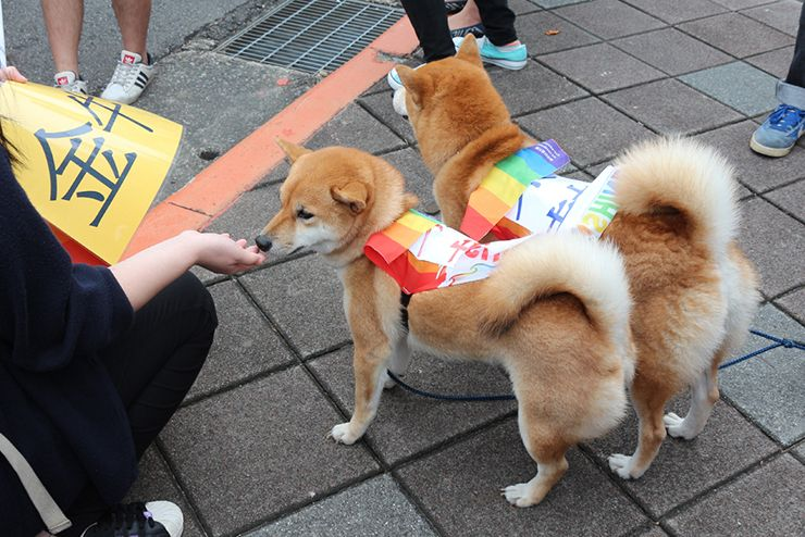 台灣同志遊行(台湾LGBTプライド)2015のパレードに参加する柴犬たち
