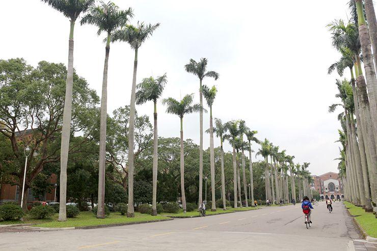 朝の台湾大学・椰林大道