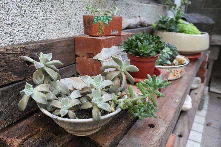 花蓮のLGBTフレンドリーゲストハウス「桂憩 Sweet Olive」のサボテンたち