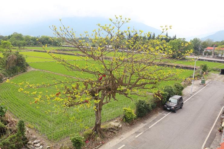 台東・池上のおしゃれゲストハウス「曬穀場 Buda Banai」のダブルルームから見える田園風景