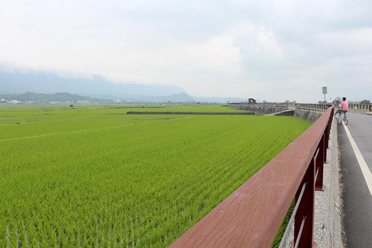 台湾の米どころ台東・池上のサイクリングロードから望む一面の水田