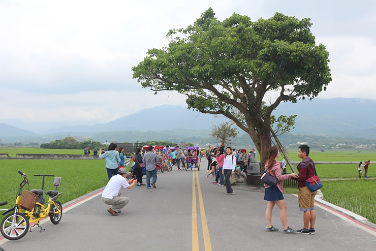 台湾の米どころ台東・池上の人気観光スポット「伯朗大道」の金城武樹