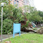 キッチンなし台湾暮らしの台風来襲時はどんな食料を備えるの?