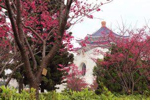 桜の咲く台北・中正紀念堂の庭園
