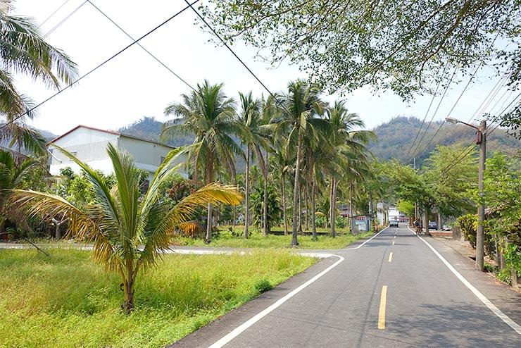 高雄・美濃の椰子が並ぶ道路