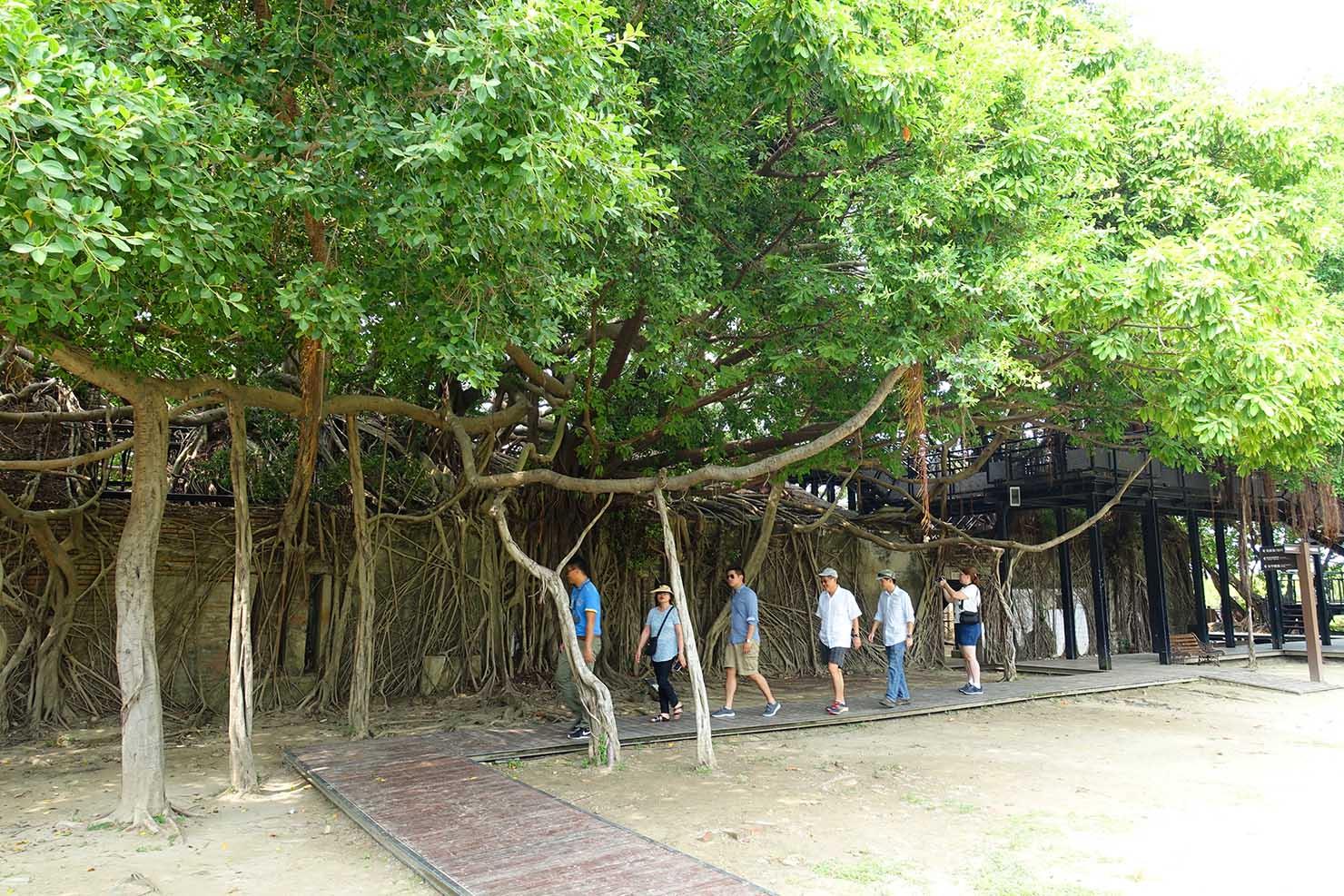 台湾の古都・台南のおすすめ観光スポット「安平樹屋」の外観