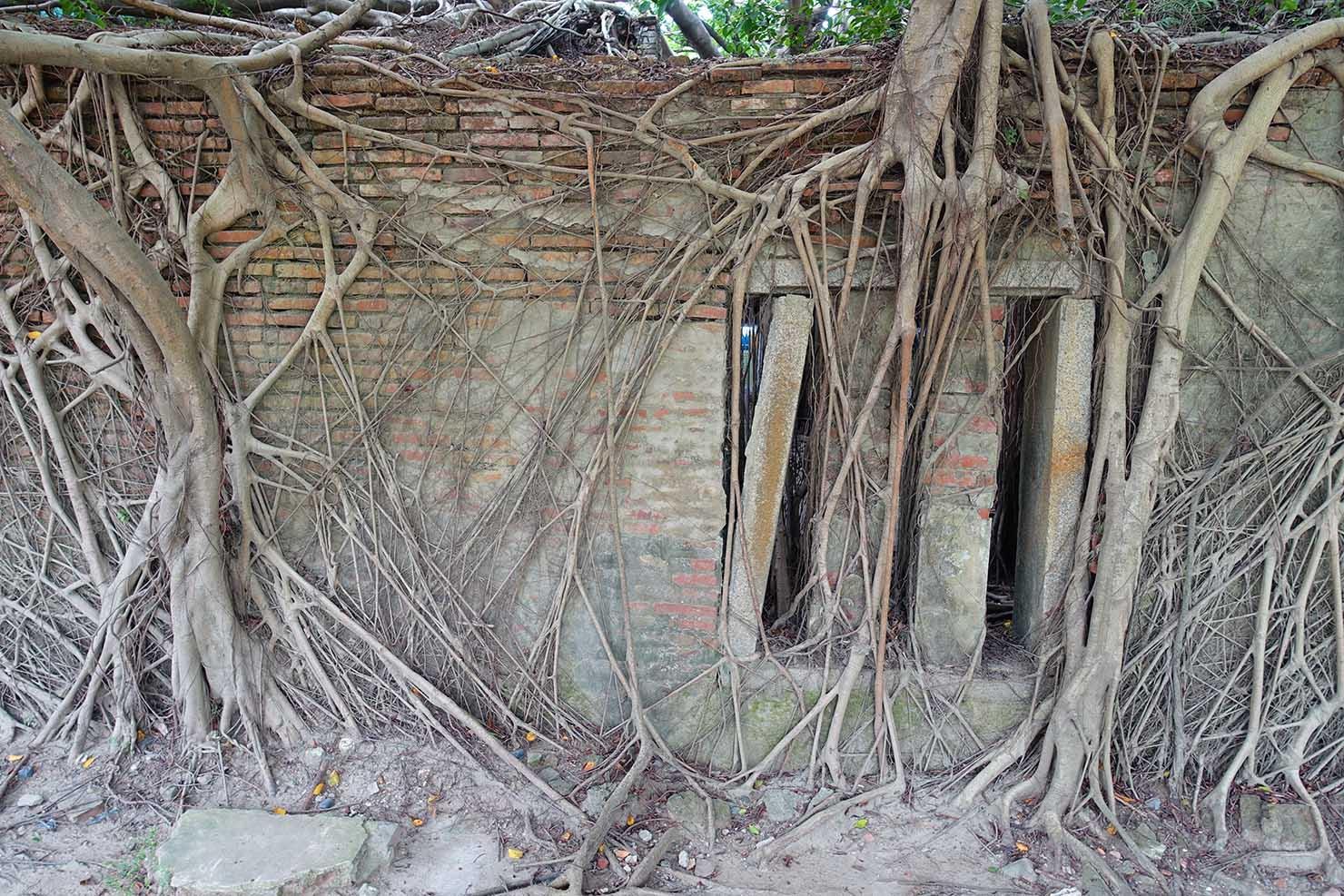 台湾の古都・台南のおすすめ観光スポット「安平樹屋」榕樹(ガジュマル)の根元