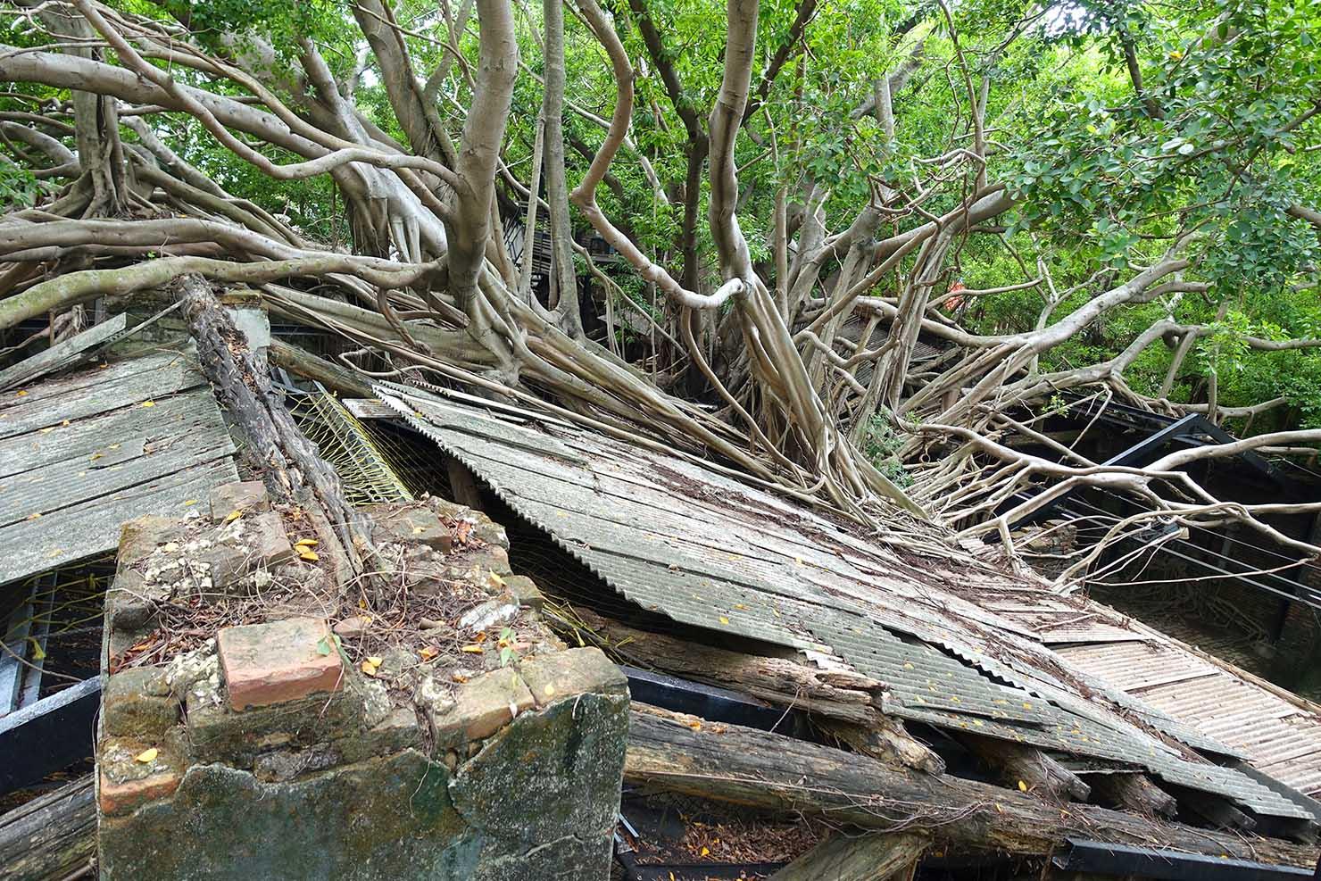 台湾の古都・台南のおすすめ観光スポット「安平樹屋」の屋根