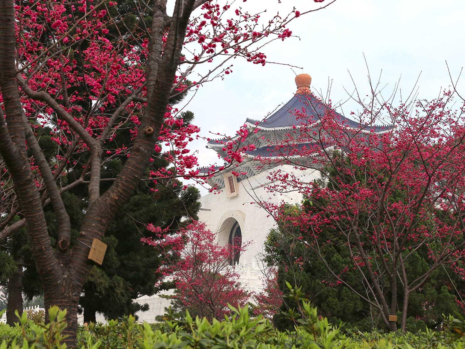 梅の花咲く春節の台北・中正紀念堂