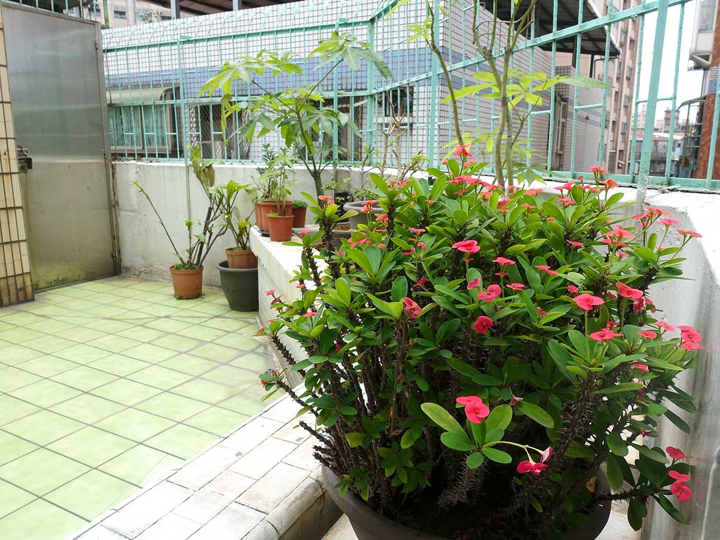 台北で台湾人彼氏と僕がルームシェアしている部屋のテラスにある鉢植え