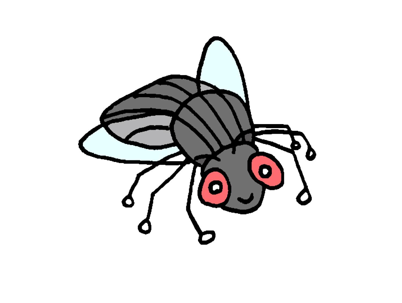 台湾でよく見かける虫「蒼蠅(ハエ)」