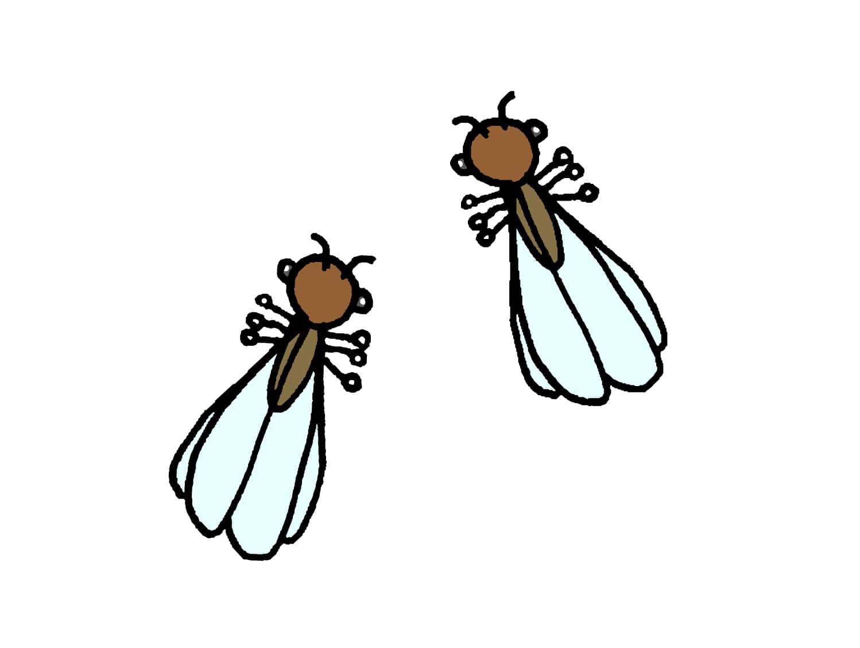 台湾でよく見かける虫「白蟻(ハネアリ)」
