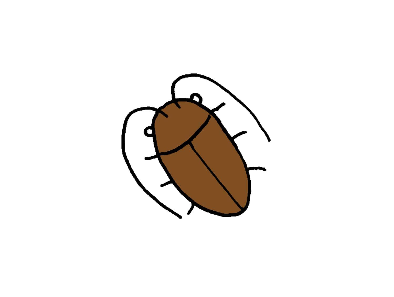 台湾でよく見かける虫「蟑螂(ゴキブリ)」
