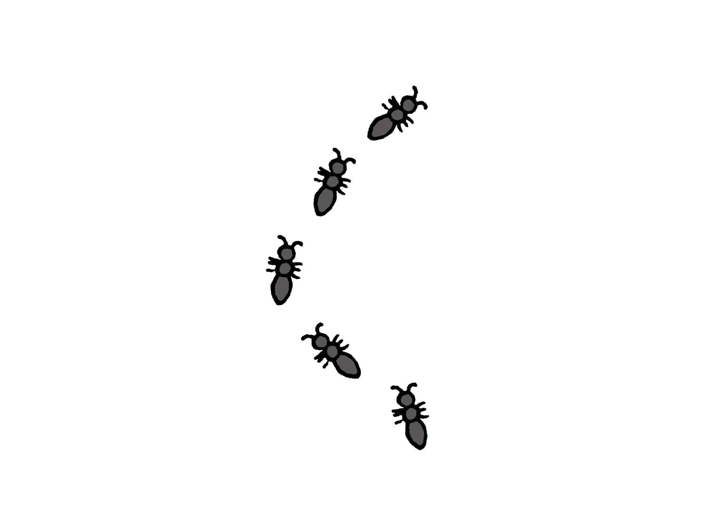 台湾でよく見かける虫「螞蟻(アリ)」