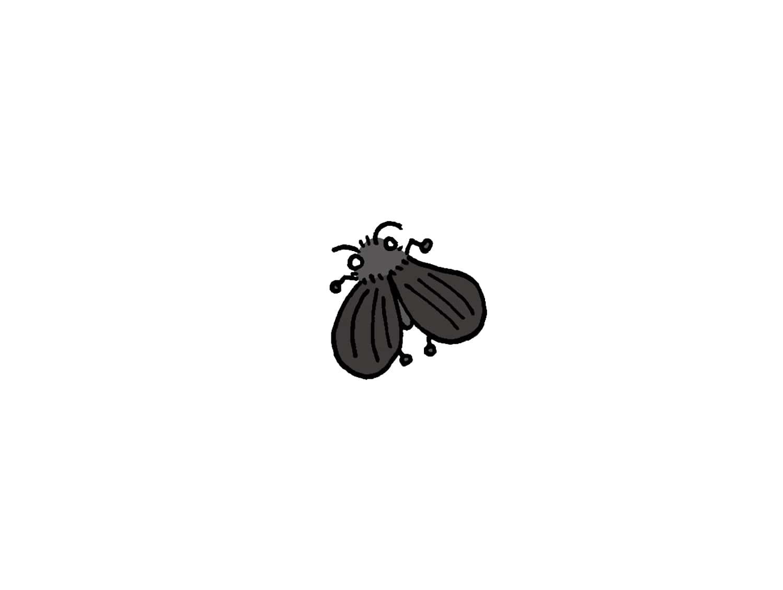台湾でよく見かける虫「蛾蚋(チョウバエ)」