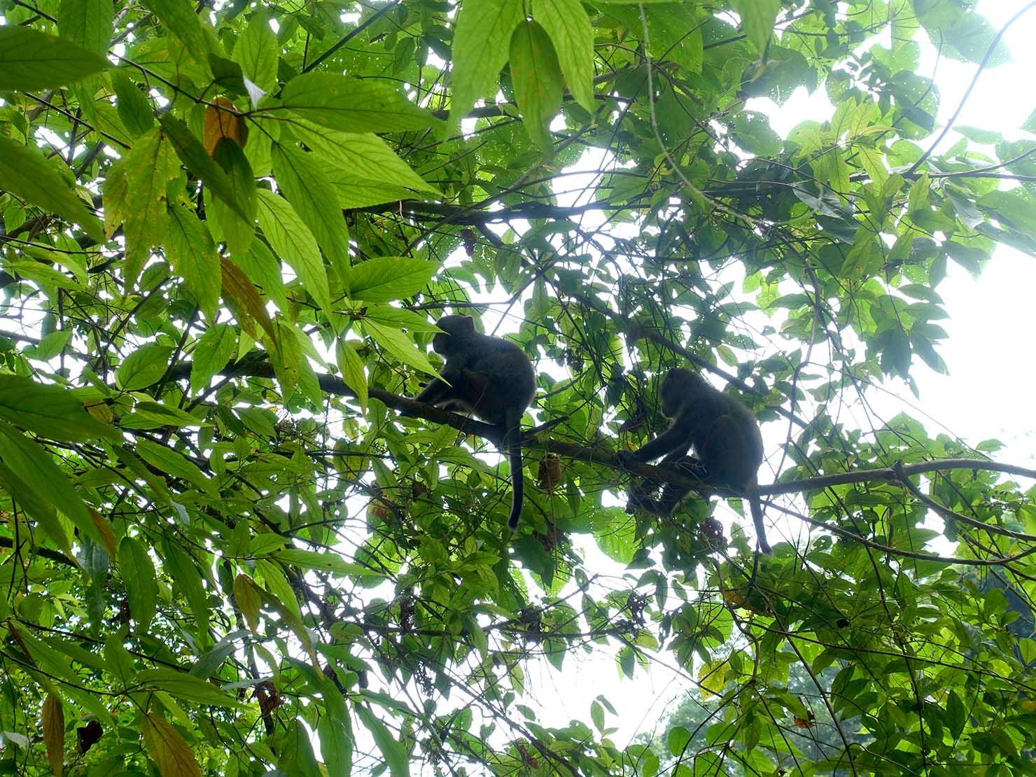KKday外国人限定「花蓮・太魯閣(タロコ)日帰りツアー」砂卡噹步道で出会った野生の猿