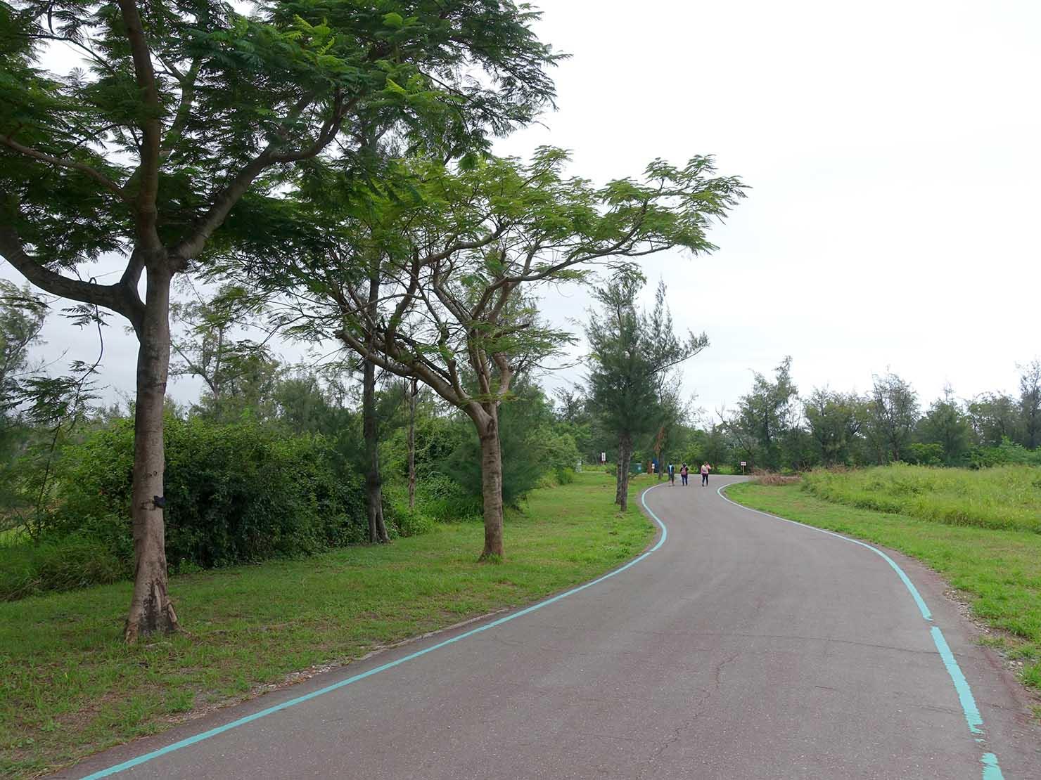 台東森林公園の遊歩道