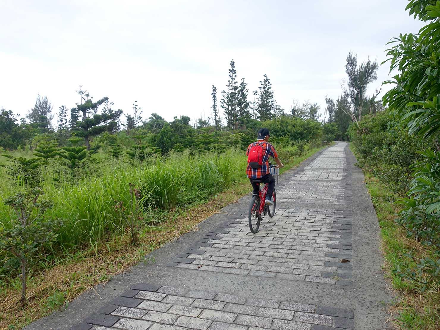 台東森林公園の海へと続く遊歩道