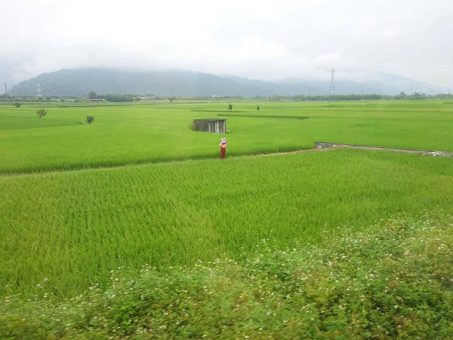 台湾鉄道の車内から見る台東の田園風景