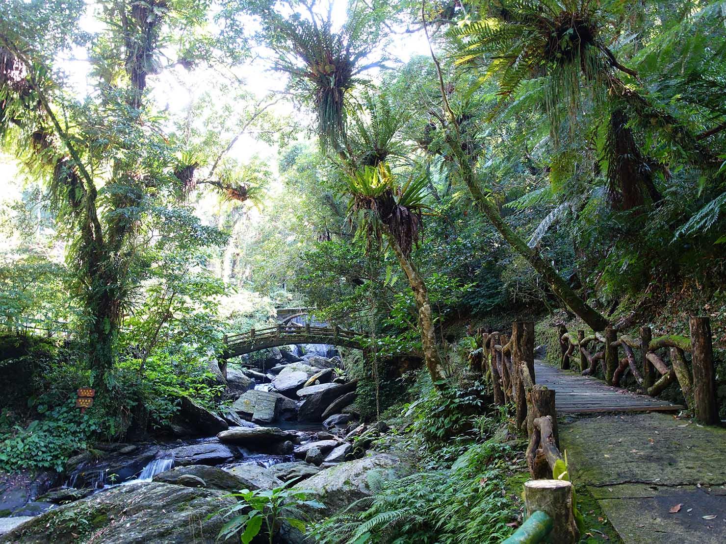 台北・烏來温泉から行けるテーマパーク「雲仙樂園」園内に広がる南国の森林