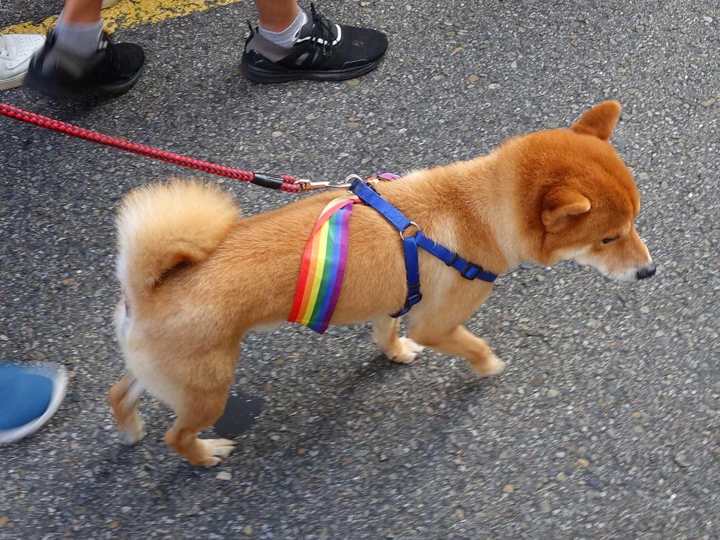 台灣同志遊行(台湾LGBTプライド)2018パレードを歩く柴犬