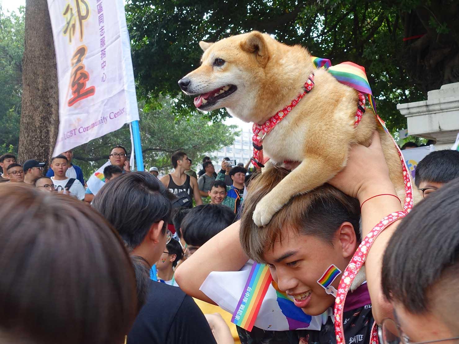 台中同志遊行(台中LGBTプライド)2018パレードに参加する柴犬