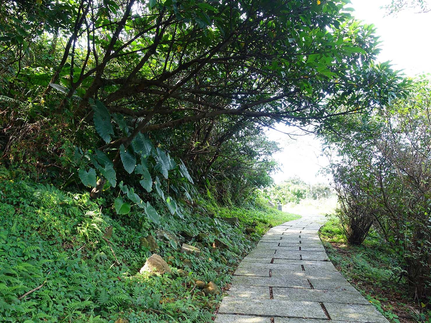 台北・九份「琉瑯路步道」の樹々が迫る遊歩道