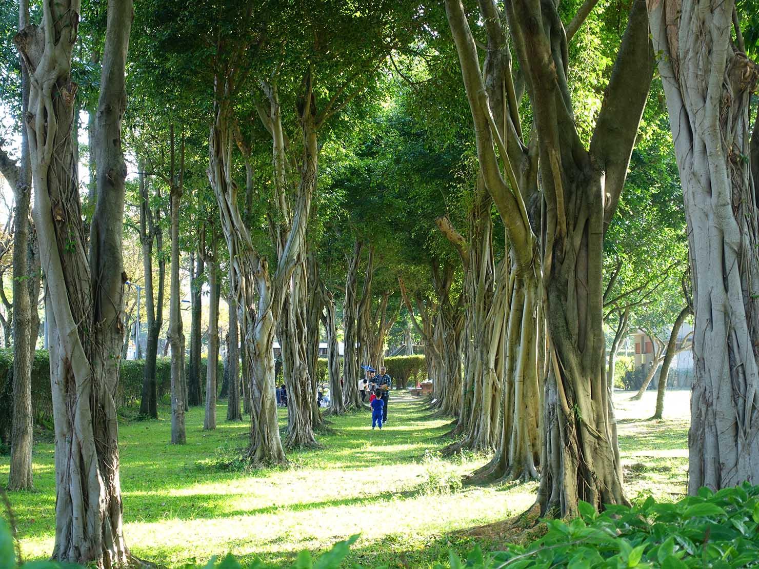 台北・大安森林公園の木々