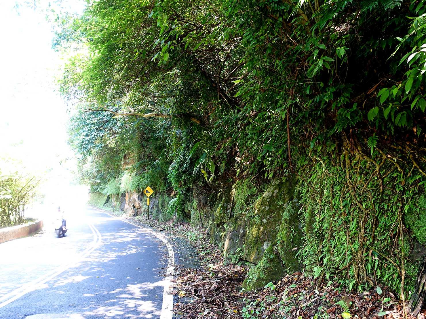 台北一周自転車道「研究院路」の切り立った崖