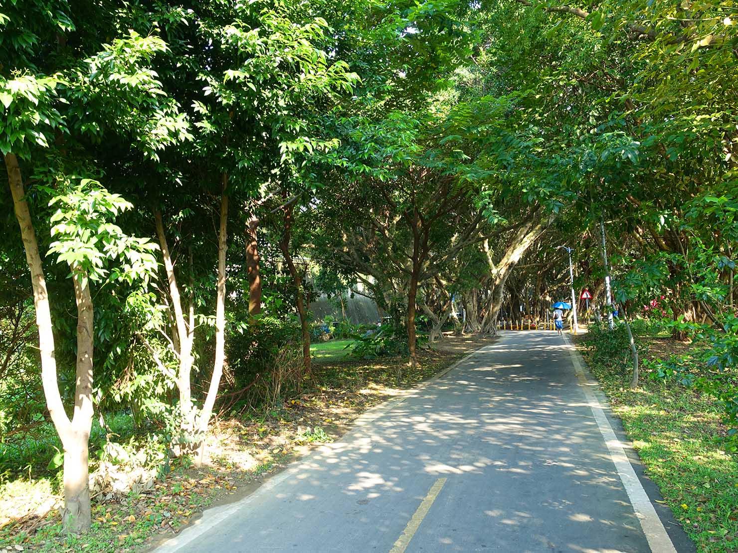 台北一周自転車道「華江雁鴨自然公園」