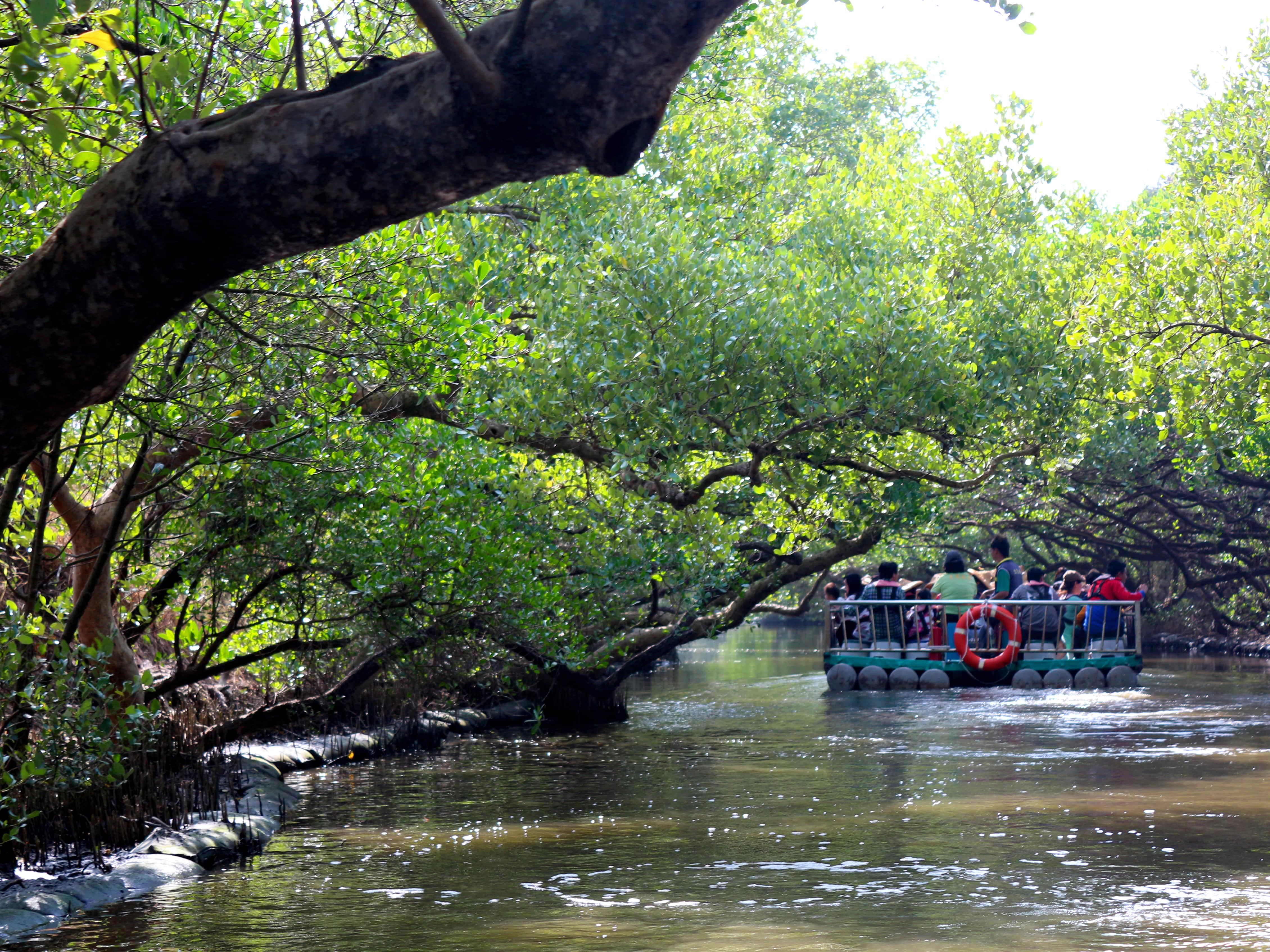 台南市街郊外のおすすめ観光スポット「四草綠色隧道」のマングローブトンネルを通る小船