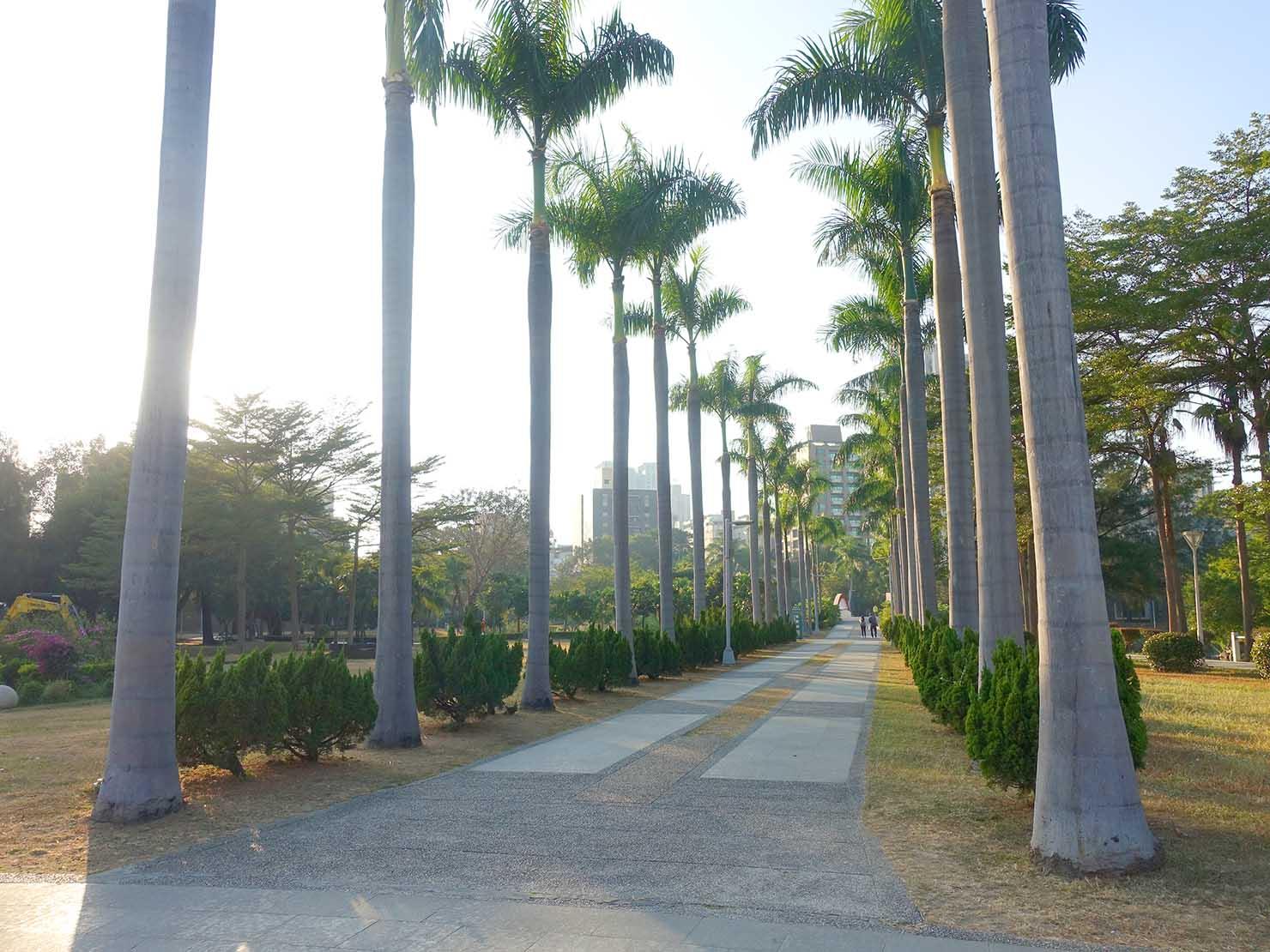 高雄・中央公園の椰子の木が伸びる道