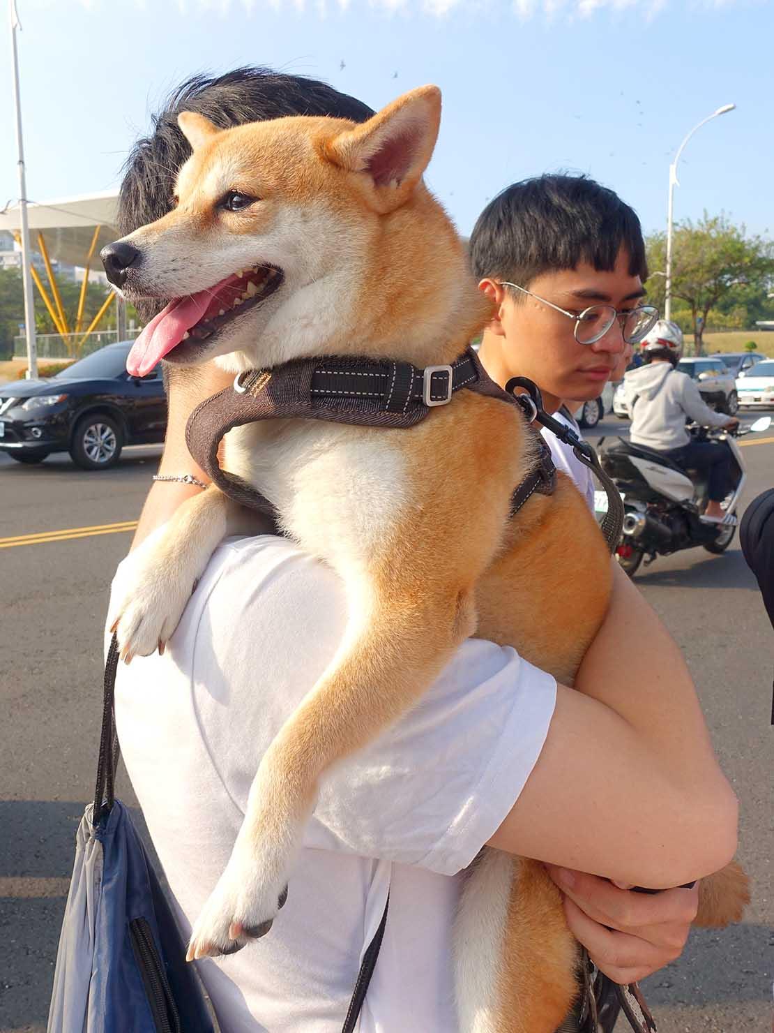 「高雄同志大遊行(高雄プライド)」2019のパレードをご主人に抱かれて参加する柴犬