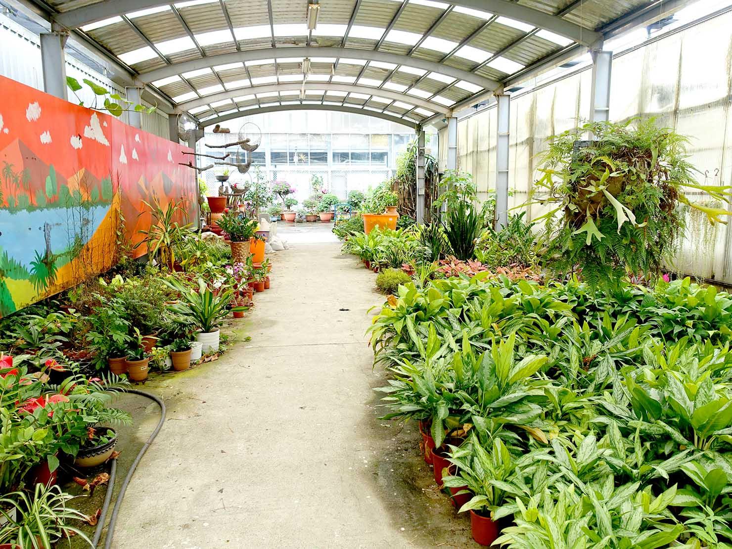 嘉義のおすすめ観光スポット「國立嘉義大學(蘭潭校區)」キャンパス内に並ぶ植物
