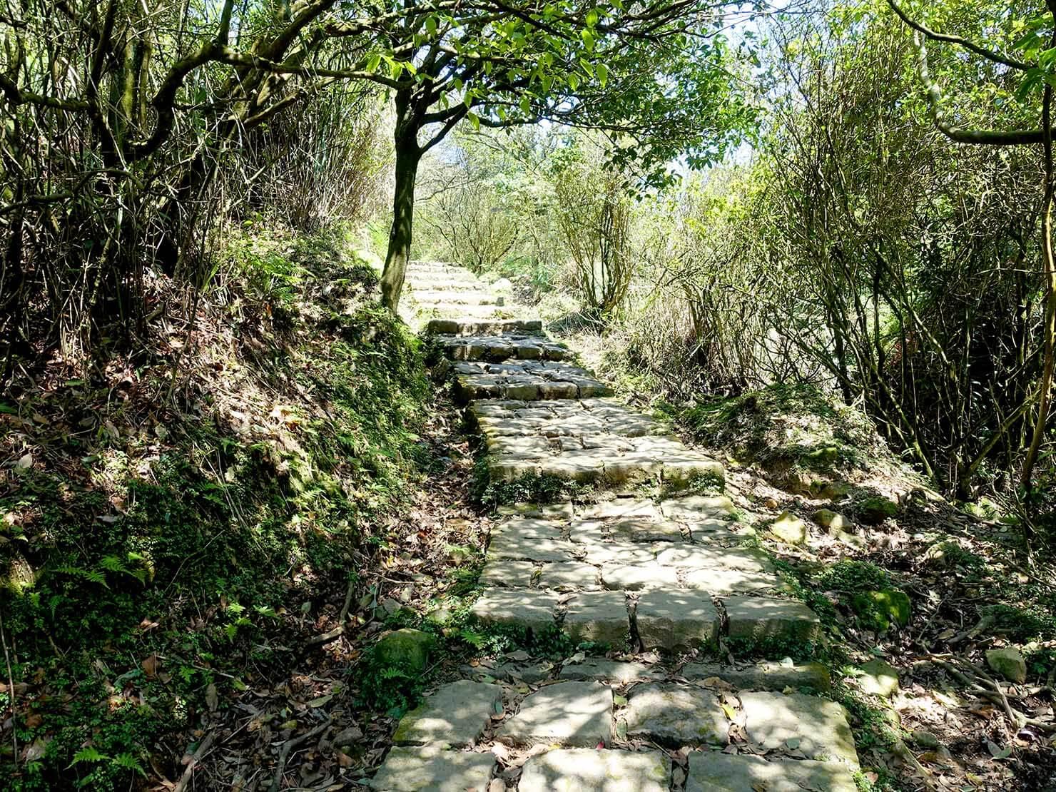 台北・陽明山のおすすめスポット「擎天崗」から冷水坑への山道
