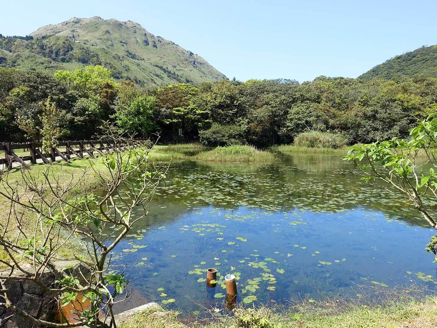 台北・陽明山のおすすめスポット「冷水坑」の生態池