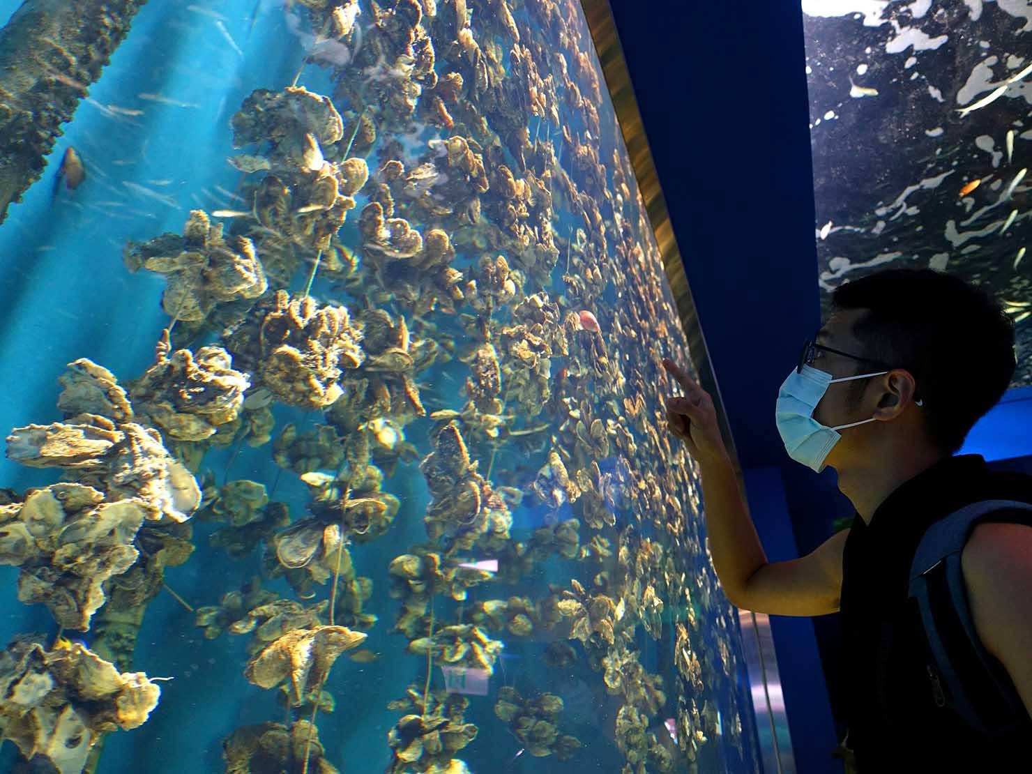 台北に誕生した都市型水族館「Xpark」の牡蠣が並ぶ水槽