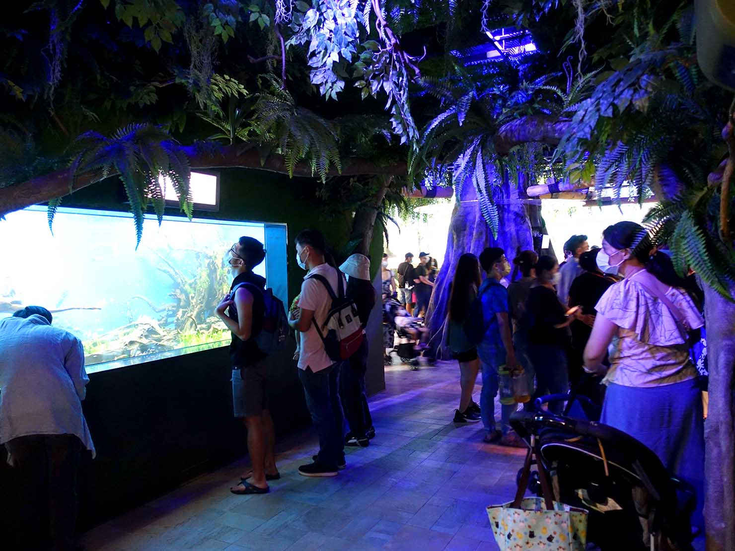台北に誕生した都市型水族館「Xpark」内エリア「雨林探險」のエントランス