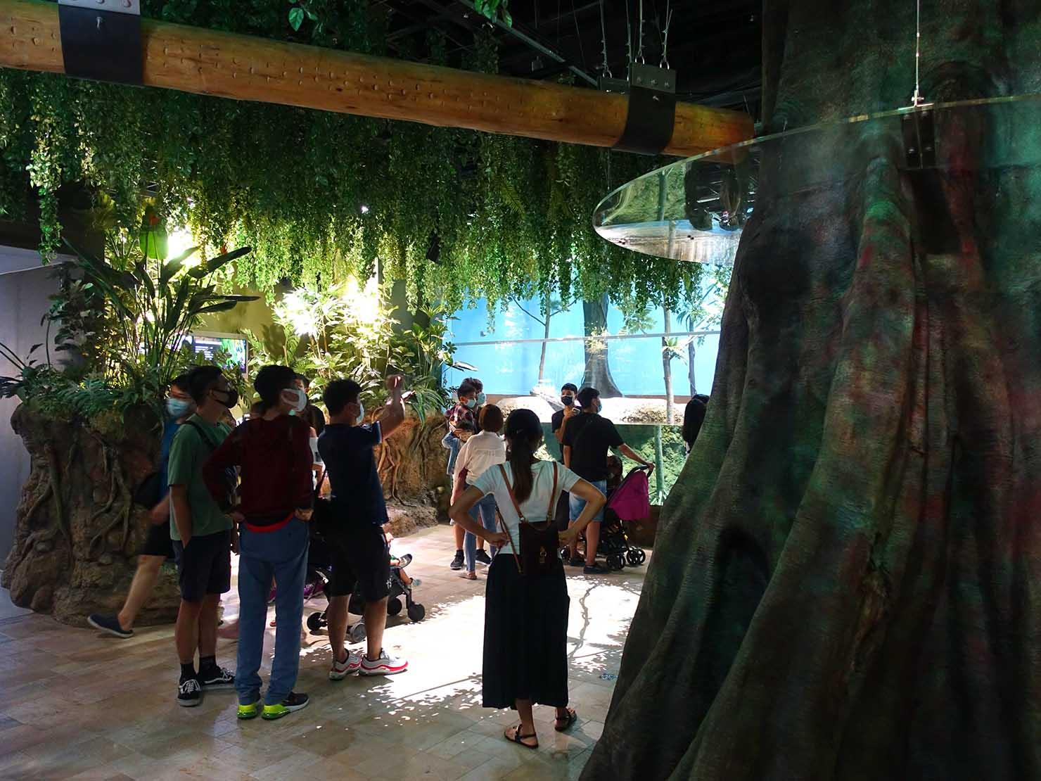 台北に誕生した都市型水族館「Xpark」内エリア「雨林探險」