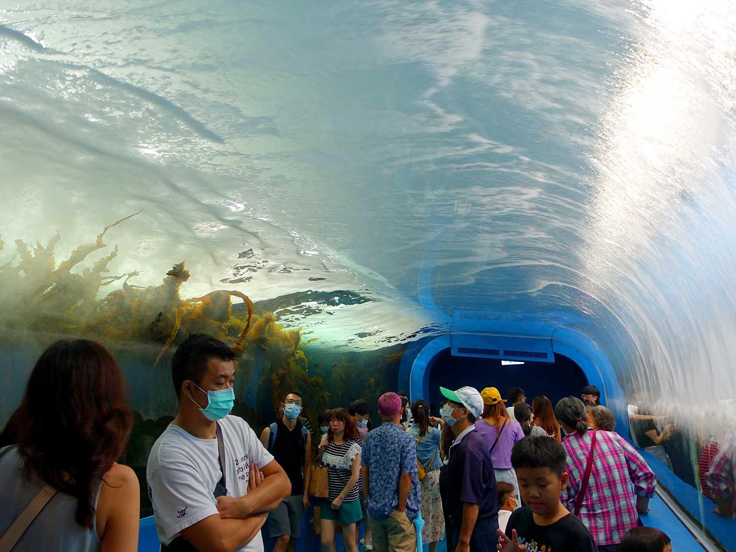 台北に誕生した都市型水族館「Xpark」内にある波のトンネル