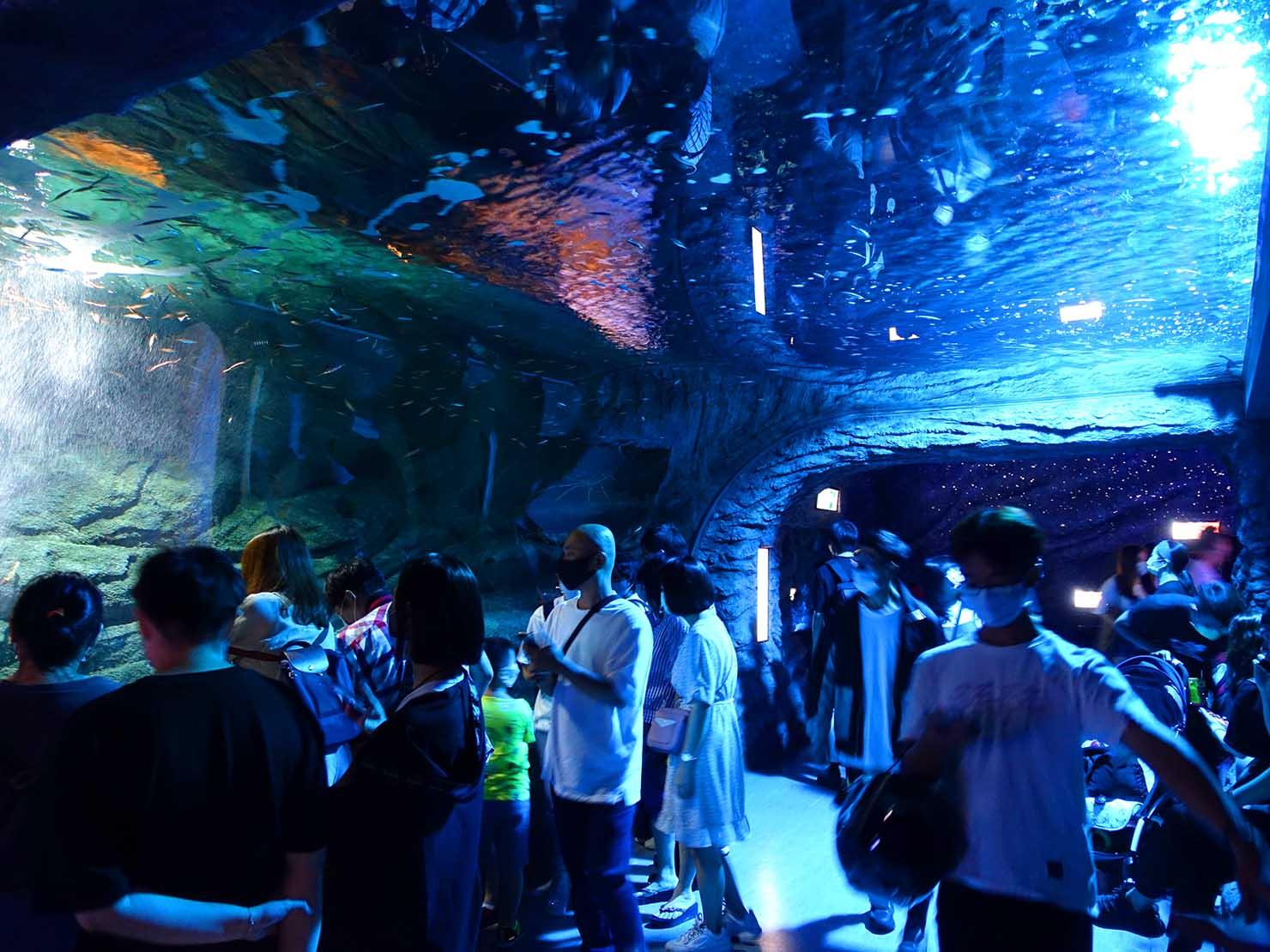 台北に誕生した都市型水族館「Xpark」内エリア「深海尋秘」