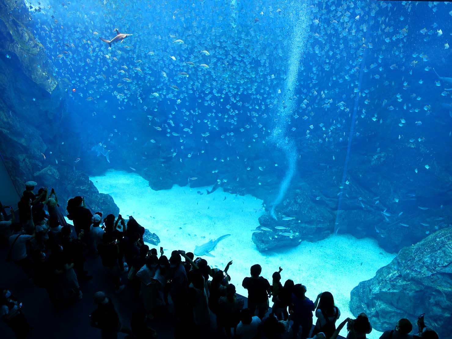 台北に誕生した都市型水族館「Xpark」内エリア「福爾摩沙」の巨大水槽を2階から眺める