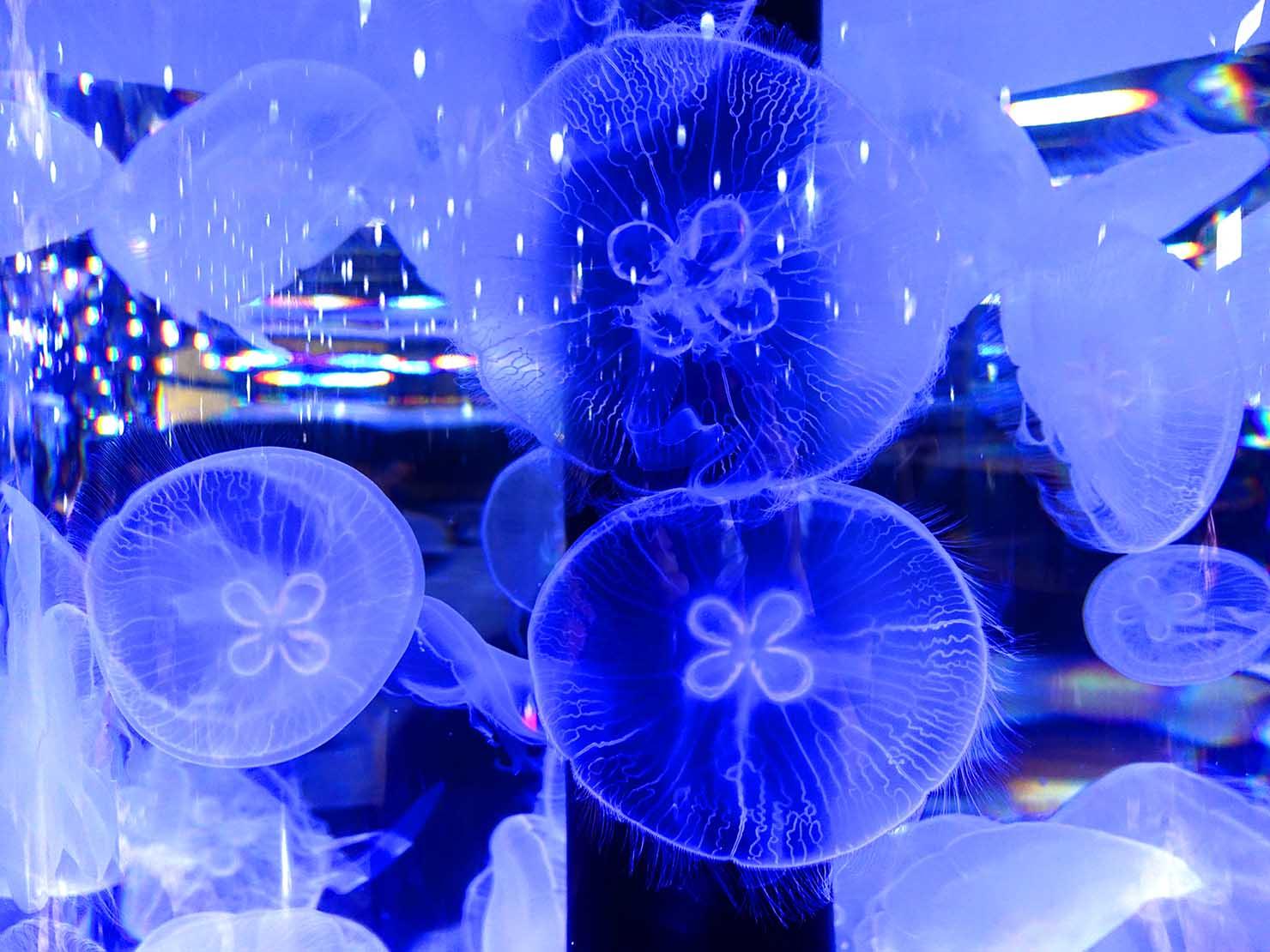 台北に誕生した都市型水族館「Xpark」内エリア「癒見水母」のクラゲ