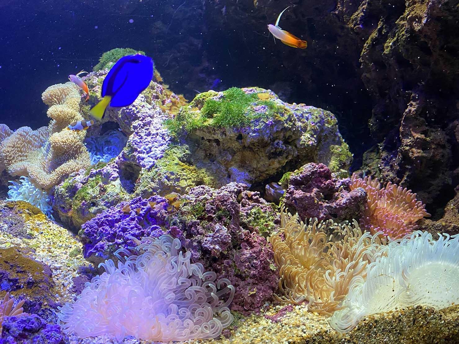 台北に誕生した都市型水族館「Xpark」内エリア「珊瑚潛行」の珊瑚