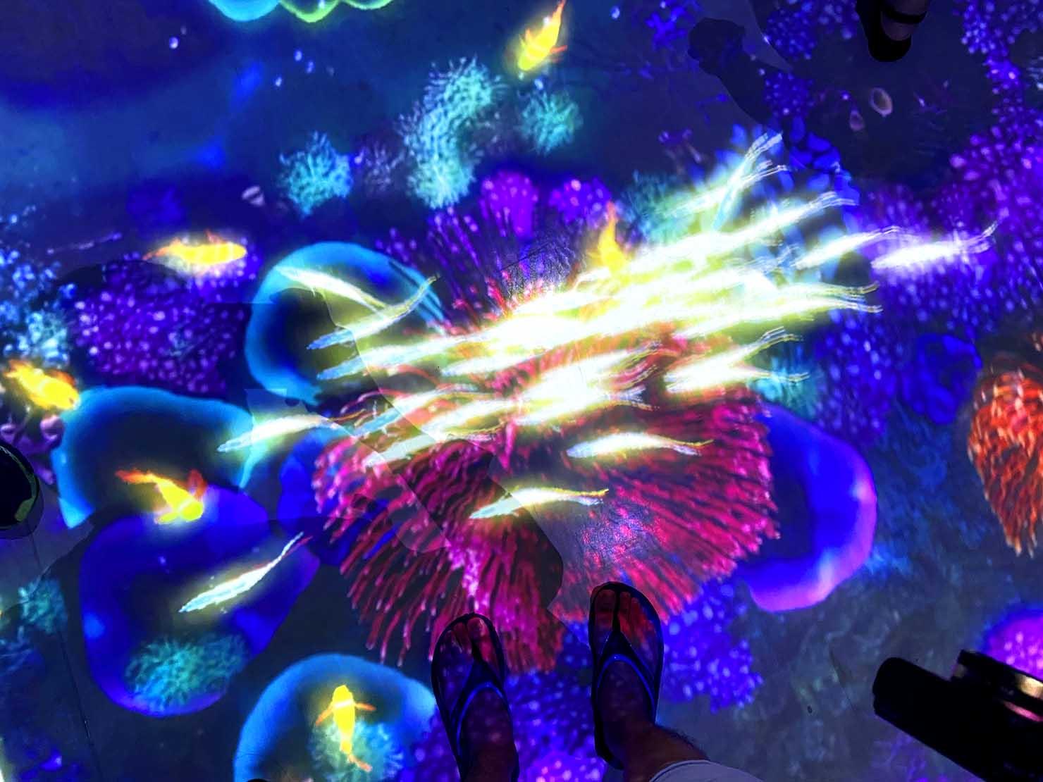 台北に誕生した都市型水族館「Xpark」内エリア「珊瑚潛行」の足もと