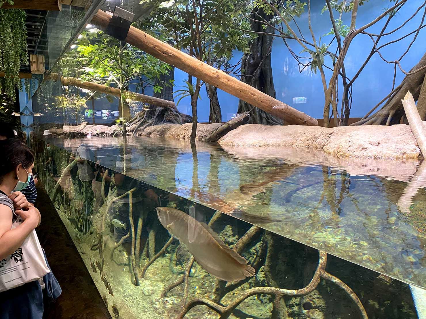 台北に誕生した都市型水族館「Xpark」内エリア「雨林探險」の水槽