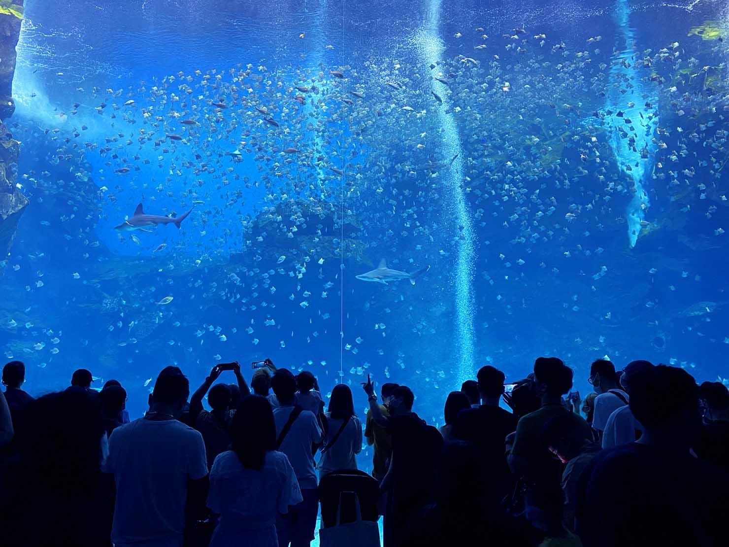 台北に誕生した都市型水族館「Xpark」内エリア「福爾摩沙」の巨大水槽